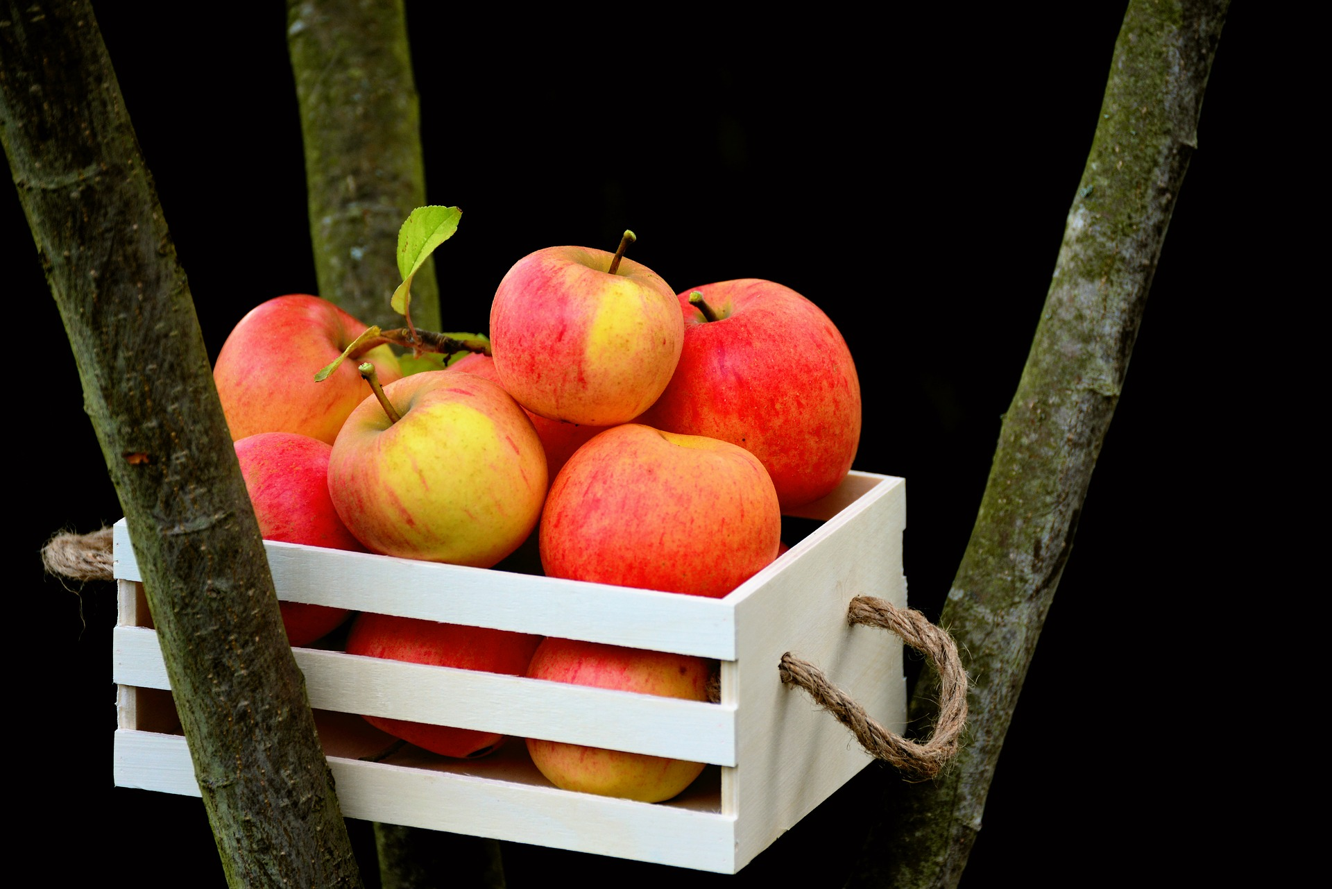 Best Fruits And Vegetable Organizer For Your Kitchen